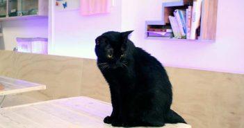 Die Katze ist König – Katzenkafee Espai de Gats