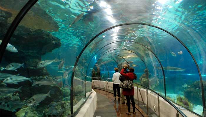 Barcelona für Kinder Besuch im Aquarium